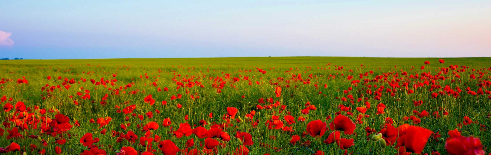 red-flowering-green-field